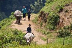 Дети пасут буйволов Стоковые Изображения