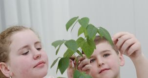 Дети рассматривая и касаясь листья дерева сток-видео