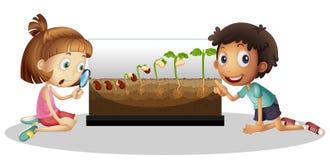 Дети смотря расти завода иллюстрация вектора