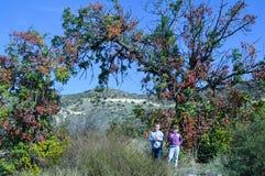 Дети стоя под деревьями формируя свод Стоковая Фотография