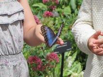 Дети с бабочкой Стоковое Изображение