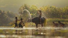 Дети с буйволом Стоковое фото RF