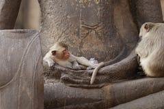 Дети Monkey сидя спать на старой статуе руки Будды, еде беспристрастного животного изображения живой природы ждать Стоковое Изображение