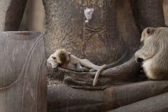 Дети Monkey сидя спать на старой статуе руки Будды, еде беспристрастного животного изображения живой природы ждать Стоковая Фотография RF