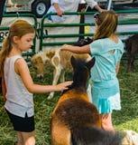 Дети Petting миниатюрные пони стоковое фото