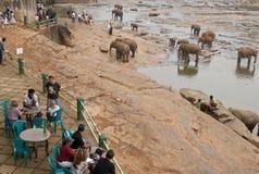 детский дом слона Стоковые Фотографии RF