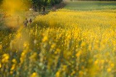3 дет ехать велосипед и ход в поле цветков Стоковое Изображение
