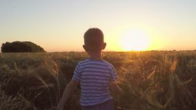 2 дет, который побежали в поле на заходе солнца сток-видео