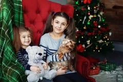 2 дет при собака сидя на стуле Концепция Криса Стоковое Фото
