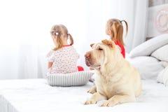 2 дет сидят и смотрят вне окно Собака лежит на th Стоковое Изображение
