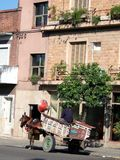 дефектная лошадь Стоковые Изображения RF