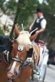 дефектная лошадь Стоковое Изображение
