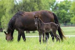 Дефектная лошадь и новичок стоковые фотографии rf