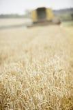 деятельность жатки поля зернокомбайна Стоковая Фотография RF