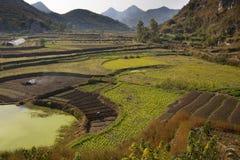 деятельность китайских полей мужицкая Стоковые Фото