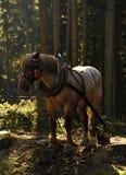 Деятельность лошади стоковые изображения rf