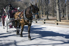 деятельность лошади Стоковое Изображение