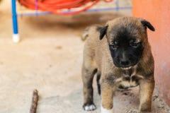 Деятельность маленького щенка Стоковая Фотография