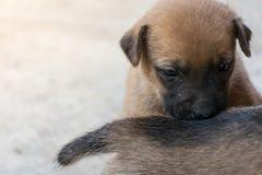 Деятельность маленького щенка Стоковые Фотографии RF
