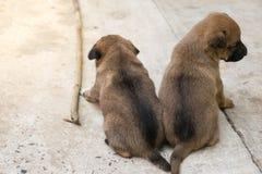 Деятельность маленького щенка Стоковое фото RF