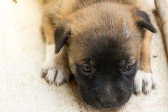 Деятельность маленького щенка Стоковые Изображения