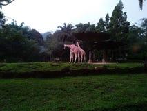 Деятельность при жирафа в зоопарке Стоковые Фото