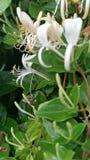 Деятельность пчелы крепко сток-видео