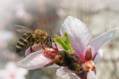 деятельность пчелы трудная Стоковое фото RF