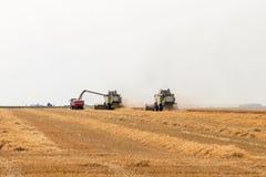 деятельность пшеницы жатки поля зернокомбайна Сбор пшеницы Стоковое Изображение RF