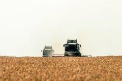 деятельность пшеницы жатки поля зернокомбайна Сбор пшеницы Стоковые Фотографии RF