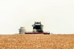 деятельность пшеницы жатки поля зернокомбайна Сбор пшеницы Стоковая Фотография