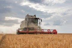 деятельность пшеницы жатки поля зернокомбайна Сбор пшеницы Стоковое фото RF