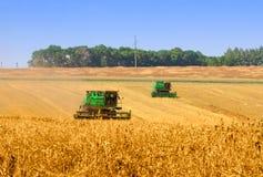 деятельность пшеницы поля зернокомбайнов Стоковое фото RF