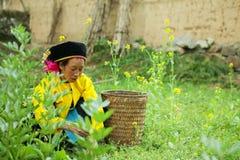 Деятельность женщины этнического меньшинства Стоковое Изображение