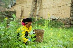 Деятельность женщины этнического меньшинства Стоковое фото RF