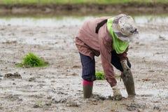 Деятельность фермера Стоковые Изображения