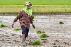 Деятельность фермера Стоковое фото RF