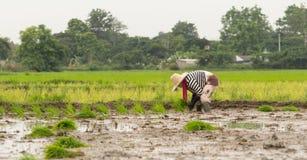 Деятельность фермера Стоковая Фотография