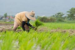 Деятельность фермера Стоковое Изображение RF