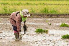 Деятельность фермера Стоковое Изображение