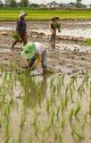 Деятельность фермера Стоковые Фотографии RF
