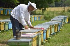 Деятельность хранителя пчелы стоковое фото rf