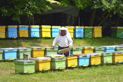 Деятельность хранителя пчелы стоковая фотография