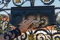 Делать желание, Прага стоковые изображения rf