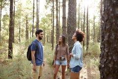 Делать шутки в сосновом лесе Стоковые Фото
