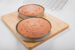 Делающ торты губки, сваренные торты все еще в олове Стоковое Изображение RF