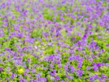 Де-фокус фиолетового цветка в саде Стоковая Фотография