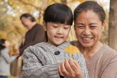 Деды и внучки в парке, смотря вниз на лист gingko Стоковые Изображения