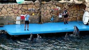 Дельфины жонглируя шариками акции видеоматериалы