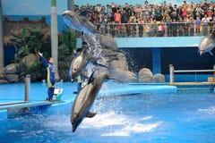 Выполнять дельфина Стоковые Изображения RF